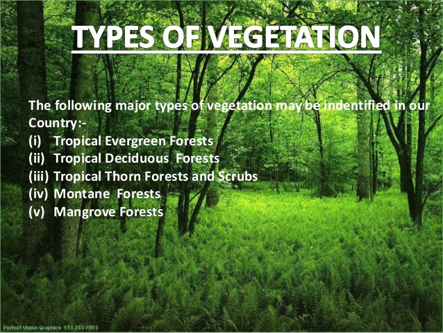 natural vegetation geography Ncert solutions for class 7 geography social science chapter 6 natural vegetation and wildlife 1 answer the following questions briefly (a) which are the two factors on which the growth of vegetation mostly depends.